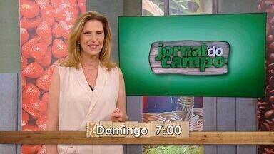 Confira os principais destaques do Jornal do Campo deste domingo (02) - O Jornal do Campo é domingo, 7h, na TV Gazeta.
