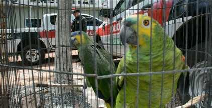 Mais de 30 aves foram apreendidas em dois bairros de João Pessoa - Pássaros foram apreendidos nos bairros do Geisel e das Indústrias e serão devolvidos à natureza.