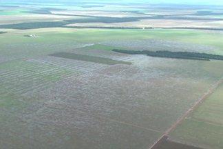 Excesso de chuva complica a colheita da safra de soja de Mato Grosso - Produção já apresenta perdas e o escoamento está bastante prejudicado.