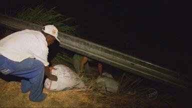 Carreta carregada com milho a granel tomba na BR-491 em Paraguaçu, MG - Carreta carregada com milho a granel tomba na BR-491 em Paraguaçu, MG