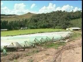 Chuva de granizo danifica residências e plantações de morangos em Lages - Chuva de granizo danifica residências e plantações de morangos em Lages