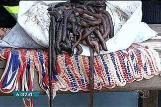 Polícia encontra animais ameaçados de extinção em bagageiro de ônibus e Goiás - Segundo a investigação da Polícia Rodoviária Federal (PRF), os animais seria vestidos para pescadores.