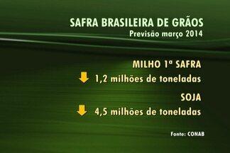 Brasil poderá colher 188,7 milhões de toneladas de grãos, diz Conab - Segundo levantamento da Conab, houve um aumento de 0,7% sobre a safra anterior. De acordo com o IBGE, o país deve produzir 190,3 milhões de toneladas na safra 2014.