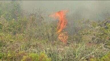 Incêndio atinge vegetação de parque ambiental de Guarapari, ES - Segundo a direção do espaço, fogo atinge limite norte do parque. Gestor acredita que destruição já é igual a do incêndio de 2008.