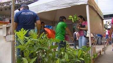 Ação comemora o Dia Mundial da Água - Mudas de plantas foram distribuídas para moradores do bairro São José.