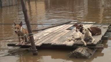 Em Porto Velho, aumento do número de cachorros abandonados nas ruas preocupa - O Bom Dia Amazônia conversa com Clotilde Brito, responsável pela associação Amigos de Patas