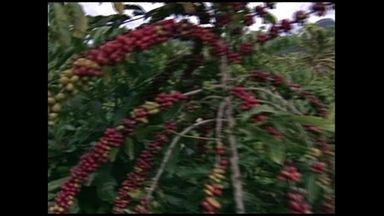 Agricultores se preparam para a colheita do café em Rio Bananal, no Norte do ES - A colheita começa oficialmente em maio, mas alguns agricultores já aproveitam para colher alguns frutos maduros.