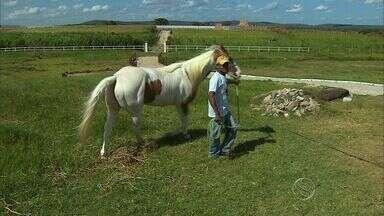 Veterinários da UFS mostram solução para a inflamação em tendões e ligamentos de cavalos - Veterinários da UFS mostram solução para a inflamação em tendões e ligamentos de cavalos