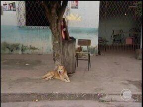 Lei que pune contra maus-tratos aos animais em Teresina não funciona - Lei que pune contra maus-tratos aos animais em Teresina não funciona