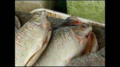 Pronaf oferece incentivos de créditos para pescadores - Financiamento é mediante a aprovação de projetos elaborados pela Emater.