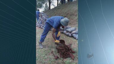 Cemel de Ribeirão deixa programa para investigar ossadas no cemitério de Perus - Ideli Salvatti disse que vai contratar peritos internacionais.