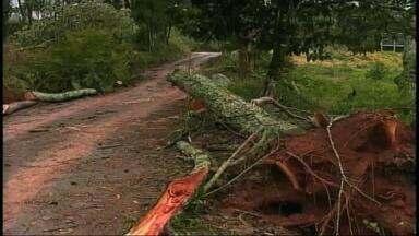 Chuva e vento causam estragos em Erechim, RS - Algumas famílias ficaram sem luz.