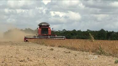 Em Balsas, o IBGE reuniu agricultores e empresas ligadas ao agronegócio - O que deve salvar os agricultores é o bom preço do grão.