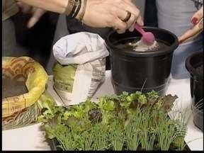 Curso ensina a montar uma horta em pequenos espaços e em casa - Dia Mundial do Meio Ambiente é celebrado nesta quinta-feira (5).