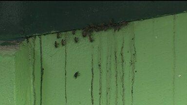 Alunos estudam sob ameaça de enxame de abelhas em escola no Paranoá - Alunos estudam sob a ameaça de um enxame de abelhas em escola no Paranoá. Também faltam professores, há meses.