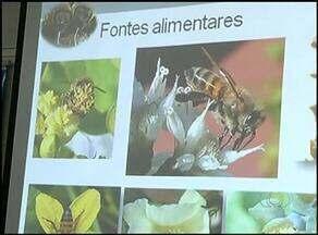 Agricultores conhecem técnicas de apicultura na exposição agropecuária de Araguaína - Agricultores conhecem técnicas de apicultura na exposição agropecuária de Araguaína