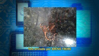 Moradores do conjunto Orlando Dantas reclamam da constante presença de escorpiões - Moradores do conjunto Orlando Dantas reclamam da constante presença de escorpiões