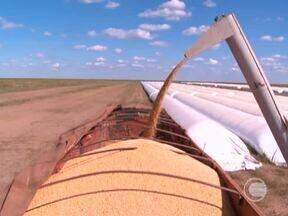 Produtores de soja estocam grãos da boa colheita de forma alternativa em Bom Jesus - Produtores de soja estocam grãos da boa colheita em armazéns na região dos cerrados