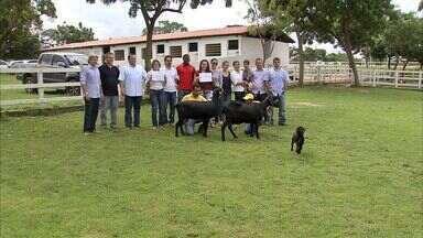 Pesquisa desenvolvida por cearenses e cadenses gera animais bem desenvolvidos - Pesquisa desenvolve raça de animais vencedora de torneios.