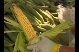 Muito milho na véspera de São João em Campina Grande - O preço do milho baixou e o que não falta é o produto por toda a cidade.