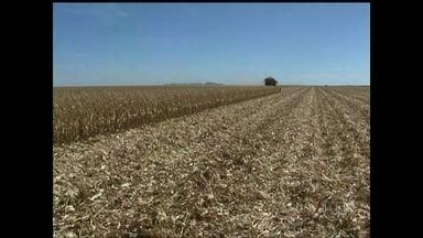 Colheita do milho safrinha chega ao fim na Bahia - A colheita do milho safrinha está terminando no oeste da Bahia. Os produtores estão conseguindo um bom preço na hora de vender o grão.