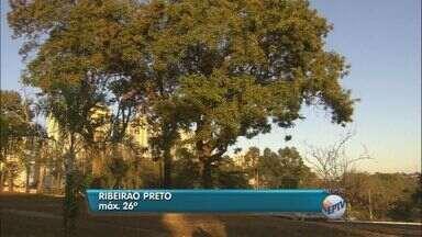 Semana começa com temperaturas baixas na região de Ribeirão Preto - A temperatura mínima na madrugada chegou a 11 graus.