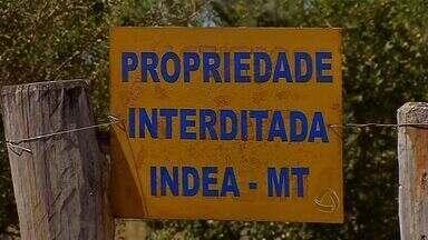 Indea-MT reforça equipes para diagnóstico de estomatite vesicular - O Indea-MT vai reforçar as equipes para diagnóstico de estomatite vesicular no estado.