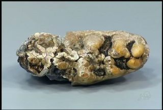 Vários fosséis são achados em sítio em Tauá - Artur Andrade explica mais sobre os fósseis.