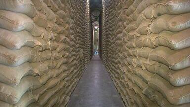 Valor pago pela saca de café oscila e deixa produtores inseguros no Sul de MG - Valor pago pela saca de café oscila e deixa produtores inseguros no Sul de MG