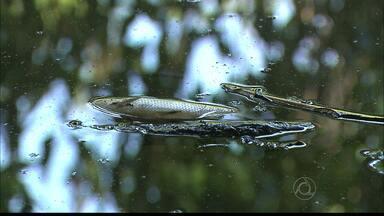 Peixes estão aparecendo mortos no Rio Gramame, em João Pessoa - Moradores estão preocupados e dizem que o problema começou no último sábado.