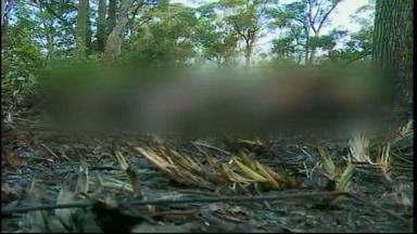 Corpo de mulher é contrado carbonizado às margens da BR-392 - Este é o trigésimo primeiro homicídio do ano.