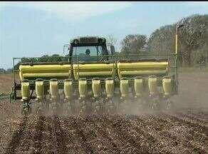 Área plantada de soja no Tocantins aumenta em 7% - Área plantada de soja no Tocantins aumenta em 7%