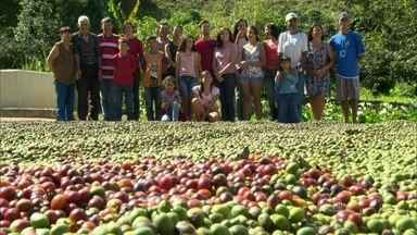 """Agricultores descobrem que preservar a floresta é mais lucrativo que destruir - Floresta está tomando de novo o espaço dos cafezais. """"Em menos trecho você consegue produzir mais e melhor"""", diz agricultor."""