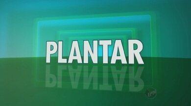 """Inscrições para 'Projeto Plantar' terminam neste sábado - O """"Projeto Plantar"""" vai redecorar ambientes em casas de telespectadores usando plantas e flores. As inscrições podem ser feitas até este sábado (16) no G1, o portal de notícias da EPTV."""