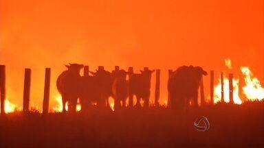 Incêndio atinge pastagens e propriedades no norte de Mato Grosso - Um incêndio atingiu pastagens e propriedades no norte de Mato Grosso