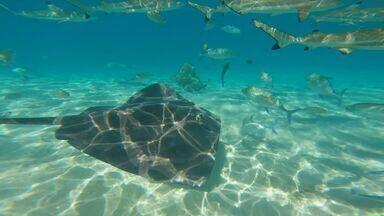 Terra da Gente - Polinésia Francesa - Bloco 03 - Mar transparente, mergulho ao lado de golfinhos, tubarões e arraias, e uma vida plena diante da beleza: é o TG na Polinésia Francesa
