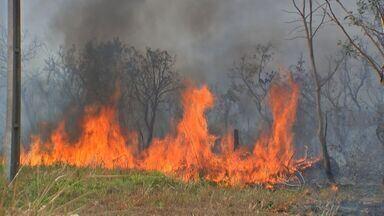 Idoso ajuda no combate aos incêndios em Mato Grosso - Idoso ajuda no combate aos incêndios em Mato Grosso.