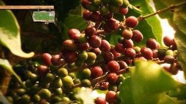 Jornal do Campo: Conheça a cafeicultura do Espírito Santo - O Jornal do Campo é domingo, 7h, na TV Gazeta.