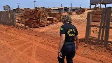 Polícia faz operação contra venda clandestina de madeira - Polícia faz operação contra venda clandestina de madeira