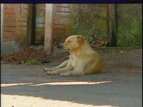 Ônibus para transportar cães abandonados visita bairros de Passo Fundo, RS - Uma equipe de veterinários percorre a cidade para fazer o cadastramento e castração dos animais.