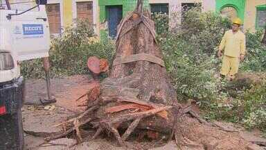 Chuva causa transtornos em vários pontos do Grande Recife - Chuva e vento derrubam árvore centenária no Recife. Foi na Rua do Sossego, no bairro da Boa Vista. Com a queda, um poste de energia elétrica se partiu. Barreira deslizou, domingo à tarde, em Paulista.