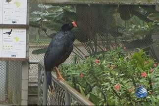 Primavera também muda a alimentação e os hábitos dos animais no zoológico de Salvador - Saiba mais sobre a influência das estações do ano na rotina dos animais.