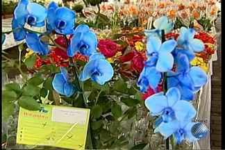 Conheça uma orquídea azul, em exposição em feira que acontece no sul do estado - Itabuna recebe a feira com entrada gratuita; confira.