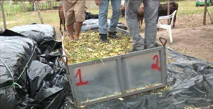 Quadro Paraíba Rural mostra a técnica da silagem, no Agreste na Paraíba - Silagem é uma alternativa dos produtores para alimentar o gado na época da estiagem.