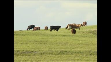 Pecuaristas de São Sepé, RS, estão preocupados com a raiva bovina - Um foco da doença já matou trinta animais, segundo a Secretaria da Agricultura.
