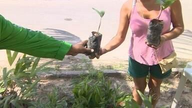 Projeto ambiental faz doação de mudas de árvores em Manaus - Ação tem objetivo conscientizar população para preservação ambiental.