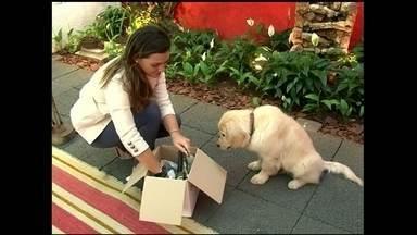 Inovação é fundamental para se destacar no mercado pet - Empresa de São Paulo lança kit personalizado com o perfil do cachorro.