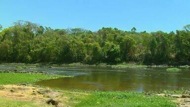Rio Mogi Guaçu sofre com a pior seca das últimas décadas - Pesquisadores dizem que 14 espécies de peixes estão ameaçadas e podem desaparecer do rio.
