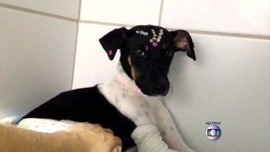 'Estamos em busca de donos', diz Veterinária da cachorra que ficou presa em parachoque - Pequena sobreviveu a 14 horas presa no carro