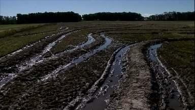Solo encharcado provoca atraso no plantio de arroz em lavouras do RS - Apenas 15% da área de arroz foi semeada no Rio Grande do Sul. O estado responde por quase 70% da produção brasileira da cultura.